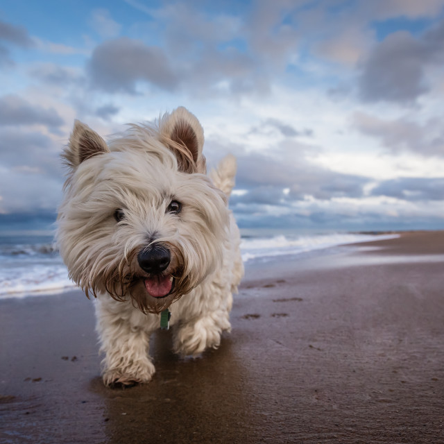 """Baxter's Beach Adventure"" stock image"