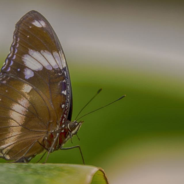 """""""Butterfly on plant"""" stock image"""