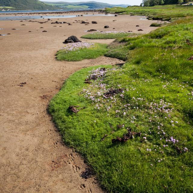 """Tarbert Loch Estuary"" stock image"