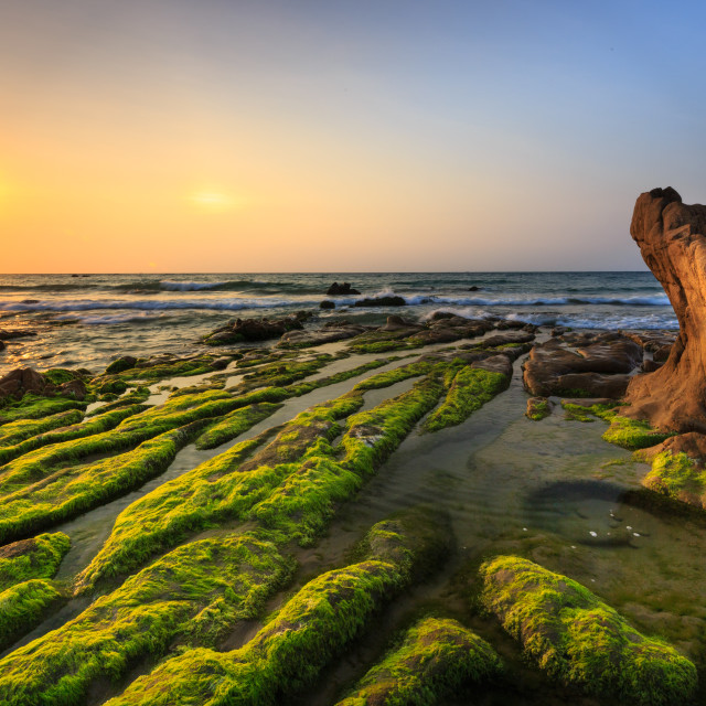 """""""Green moss on the rocks at the beach Co Thach, Vietnam"""" stock image"""