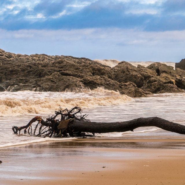 """""""Tree trunk died on a beach"""" stock image"""