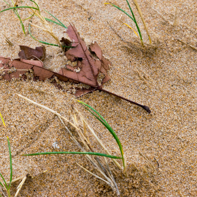 """""""Leaf of tree in the sand"""" stock image"""