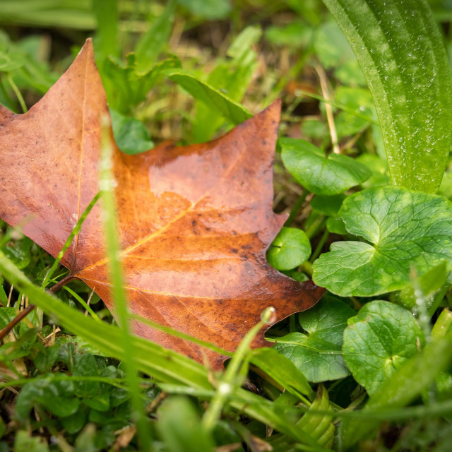 """""""Fall colors, brown and green"""" stock image"""