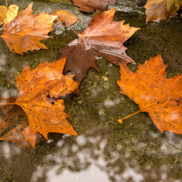 """""""Fall colores, water and brown"""" stock image"""