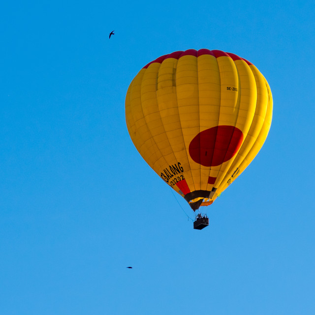 """""""Hot air balloon with common swifts"""" stock image"""