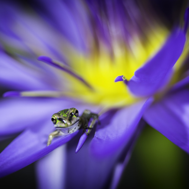 """""""Lily Frog"""" stock image"""