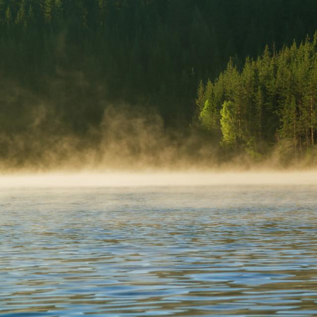 """""""Sunrise over foggy lake"""" stock image"""