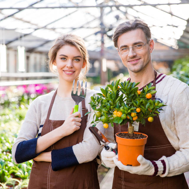"""Happy attractive woman and man gardeners holding small mandarine tree"" stock image"