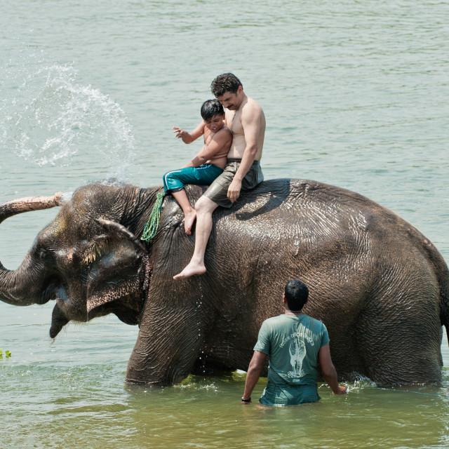 """Getting a soaking, Chitwan National Park, Nepal"" stock image"