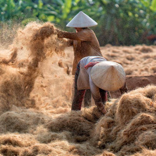 """Exposing coconut fibre"" stock image"