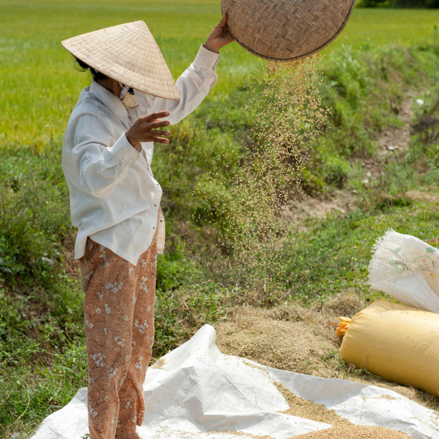 """Farm Worker, Vietnam"" stock image"