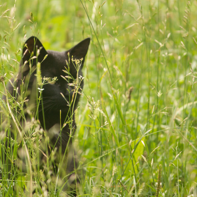 """""""Cat in the grass"""" stock image"""