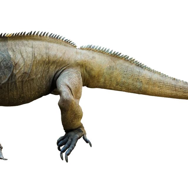 """""""Iguana rhinoceros"""" stock image"""