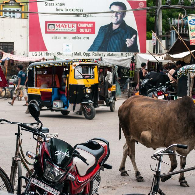 """""""Street in Bikaner"""" stock image"""