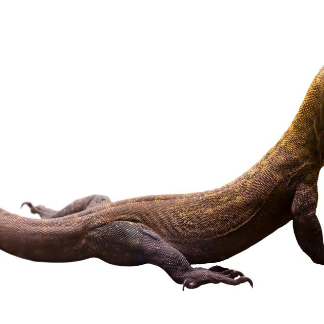 """""""Komodo dragon (Varanus komodoensis)"""" stock image"""