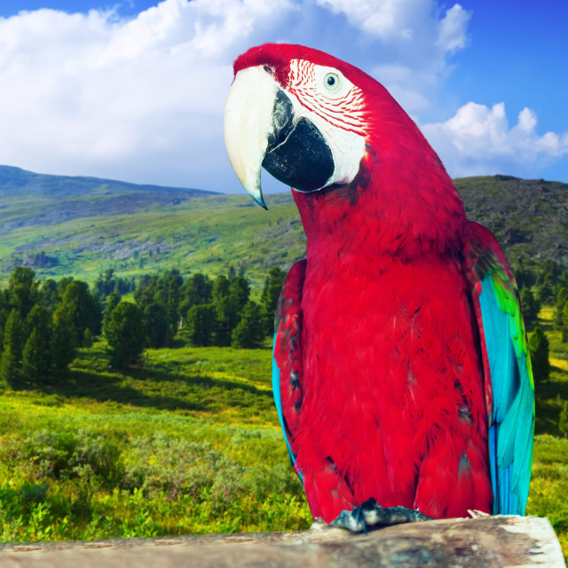 """""""Macaw at wildness"""" stock image"""