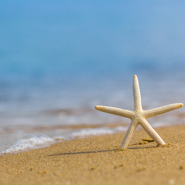"""""""Starfish at the sand sea or ocean beach"""" stock image"""