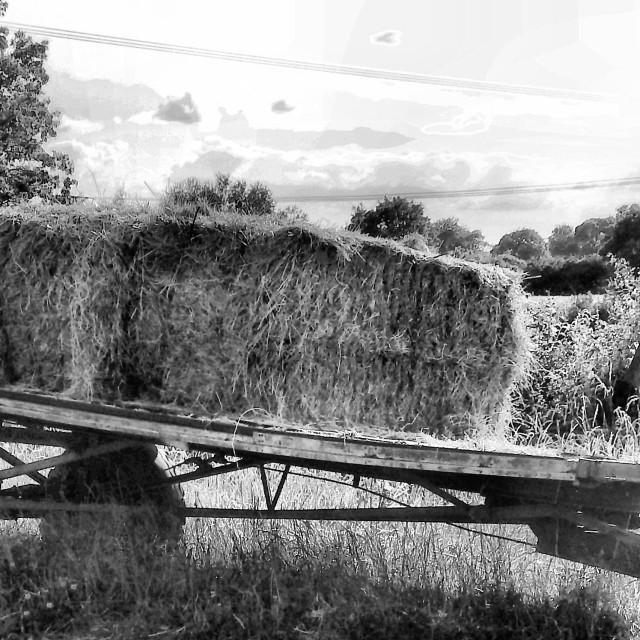 """Abandoned Hay Bales"" stock image"