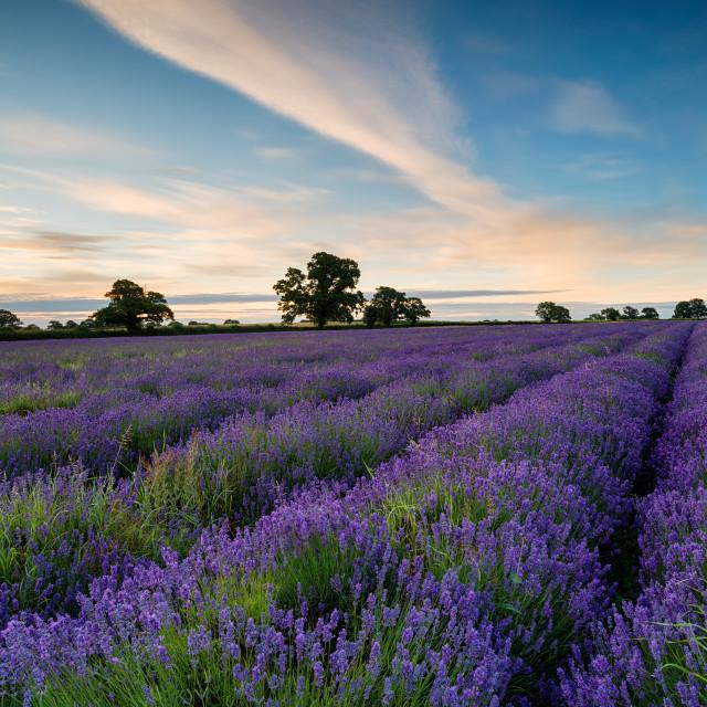 """Sunrise in Somerset"" stock image"