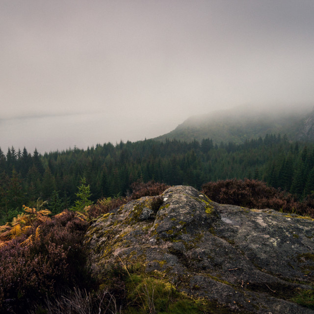 """Farigaig Forest in Mist"" stock image"