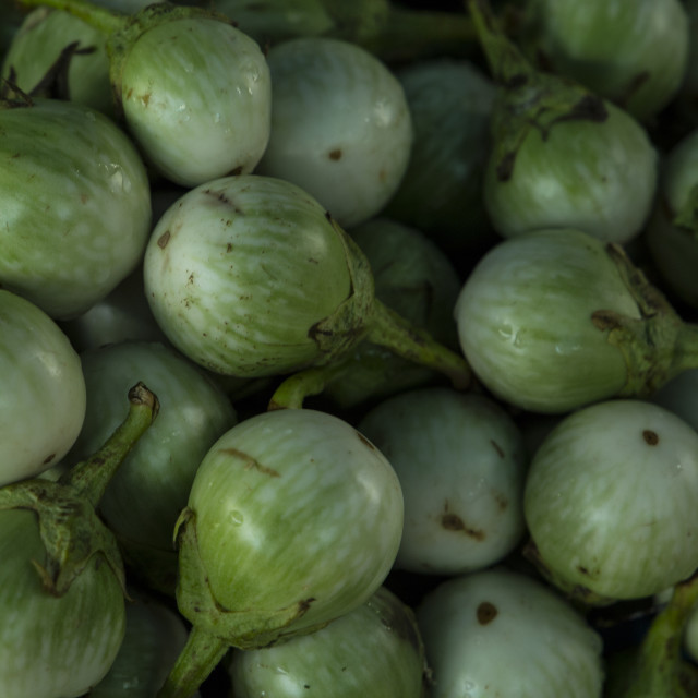 """Thai eggplant"" stock image"