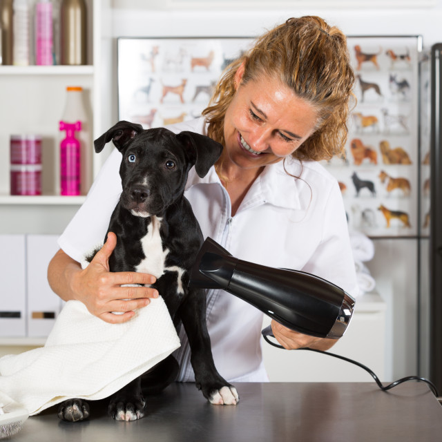 """""""Vet with his dog American Staffordshire"""" stock image"""