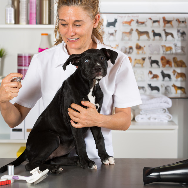 """Vet with his dog American Staffordshire"" stock image"