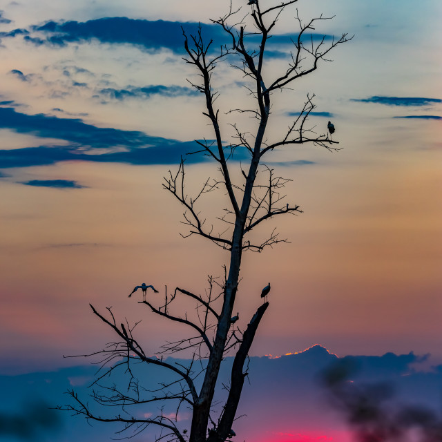 """Few storks meeting the sunset"" stock image"