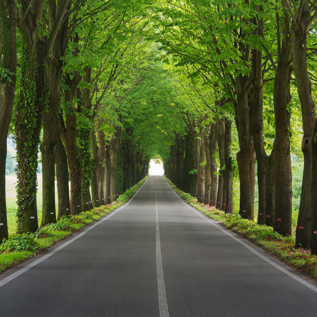 """Tree tunnel"" stock image"