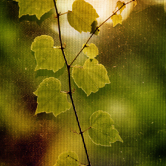 """""""Ivy on screen"""" stock image"""