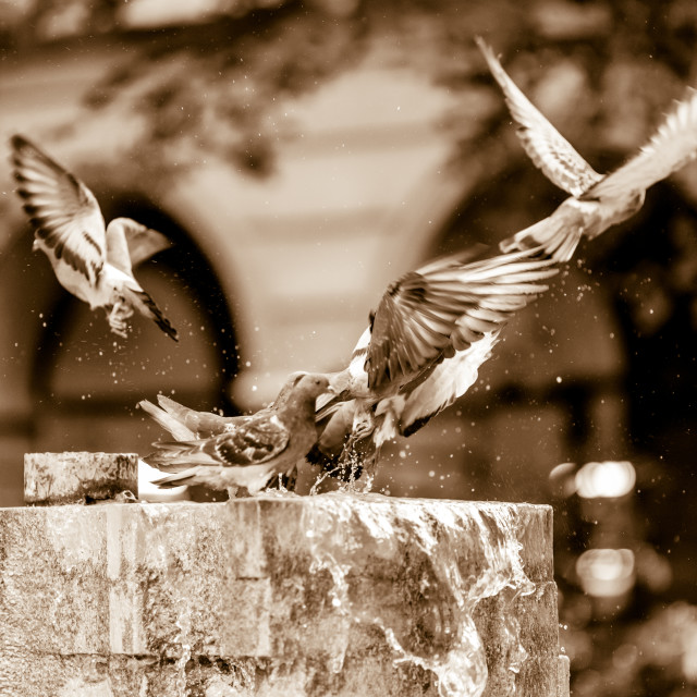 """""""Birds Blurred in Motion"""" stock image"""