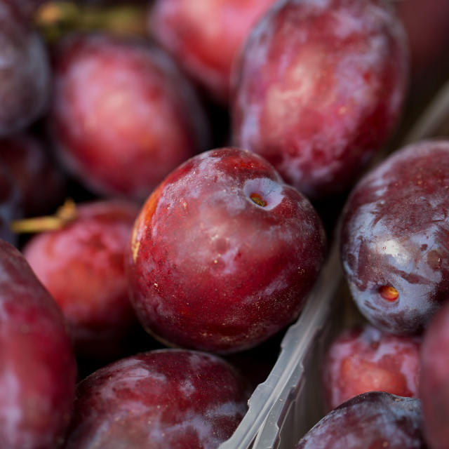 """close up of satsuma plums in box at street market"" stock image"