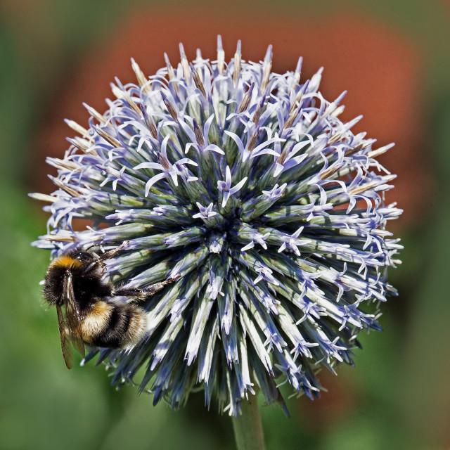 """""""Ball and Bee (II)"""" stock image"""