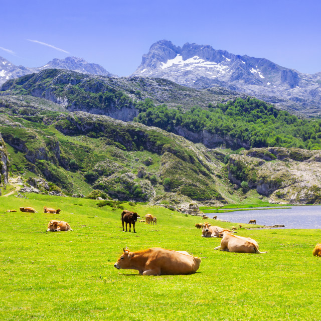 """""""beautiful summer mountains landscape with lake and pasture"""" stock image"""