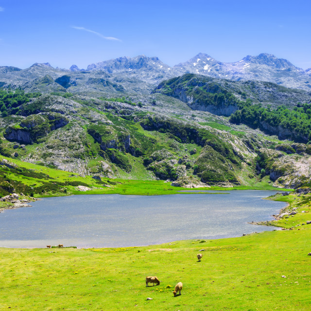 """""""View of lake Ercina in summer"""" stock image"""