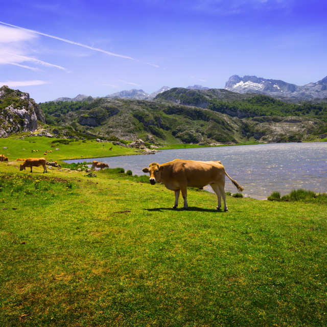 """""""mountains landscape with lake and pasture"""" stock image"""