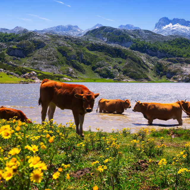 """""""beautiful mountains landscape with lake and cows"""" stock image"""