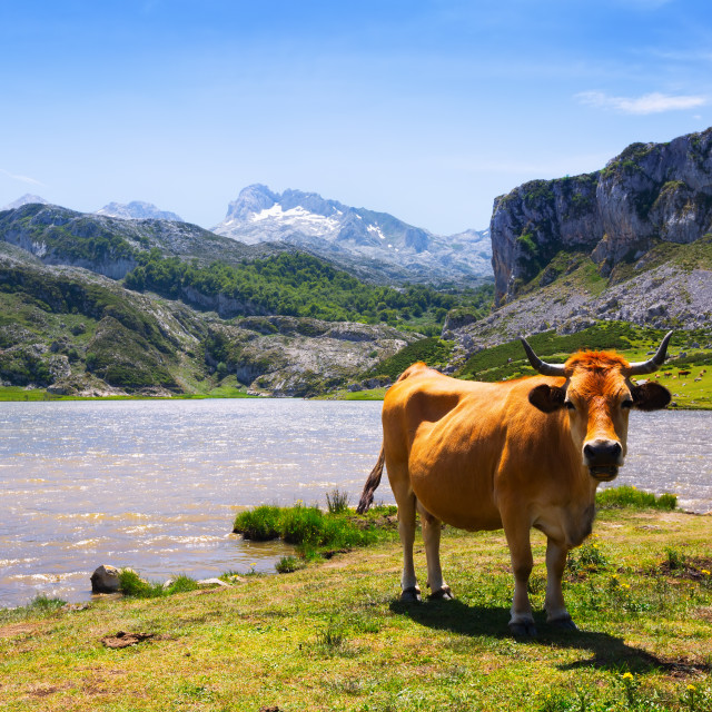 """""""mountains landscape with lake and cow"""" stock image"""