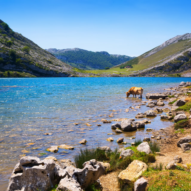 """""""mountains landscape with lake and cows. Lake Enol"""" stock image"""