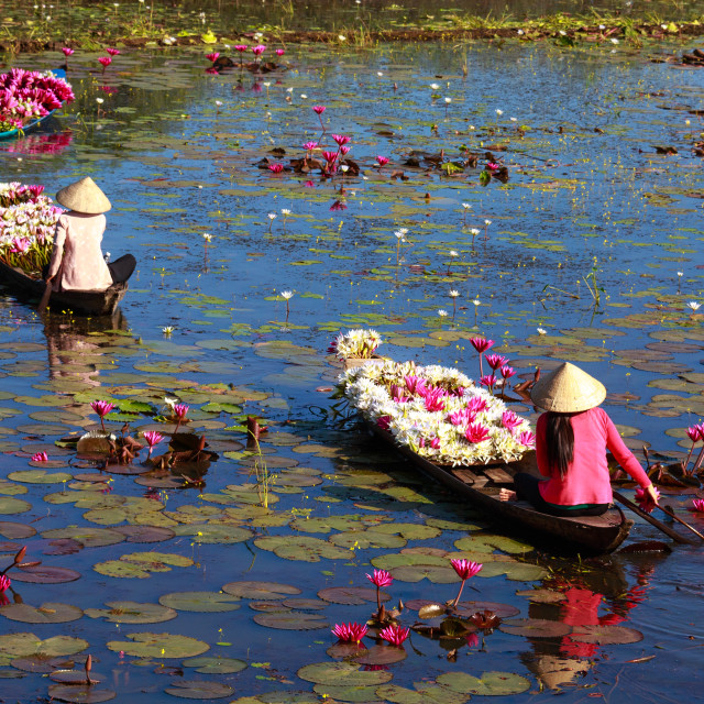 """women boating on lakes harvest water lilies"" stock image"