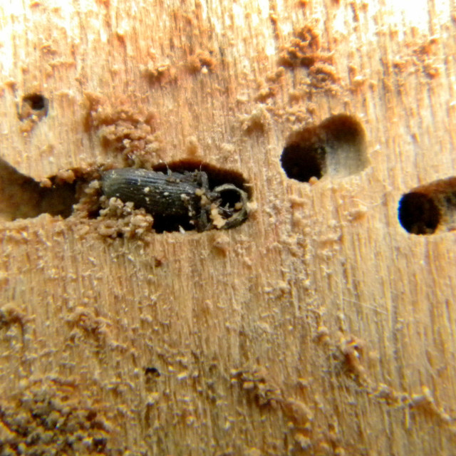 """Woodworm"" stock image"