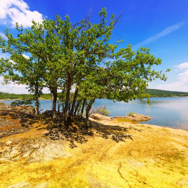 """Oaks at lake. Duero river in Soria Province"" stock image"