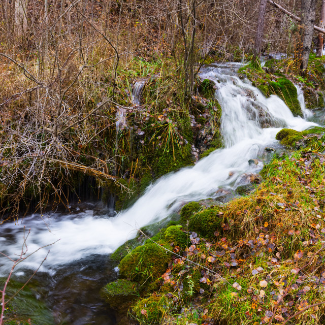 """""""brook with moss stones at forest"""" stock image"""
