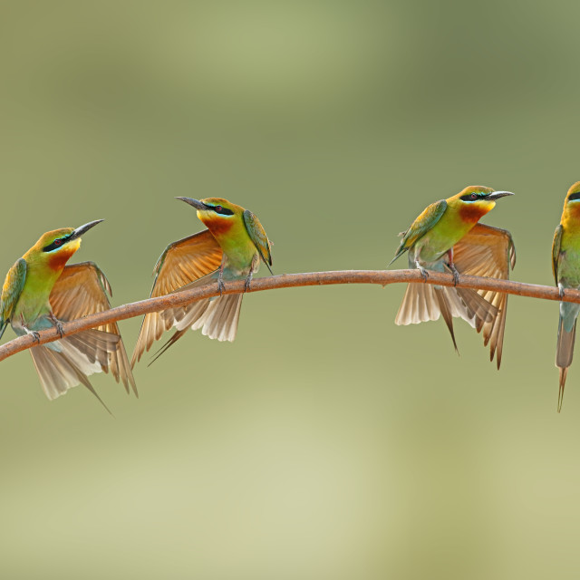 """The Birds fashion Week"" stock image"