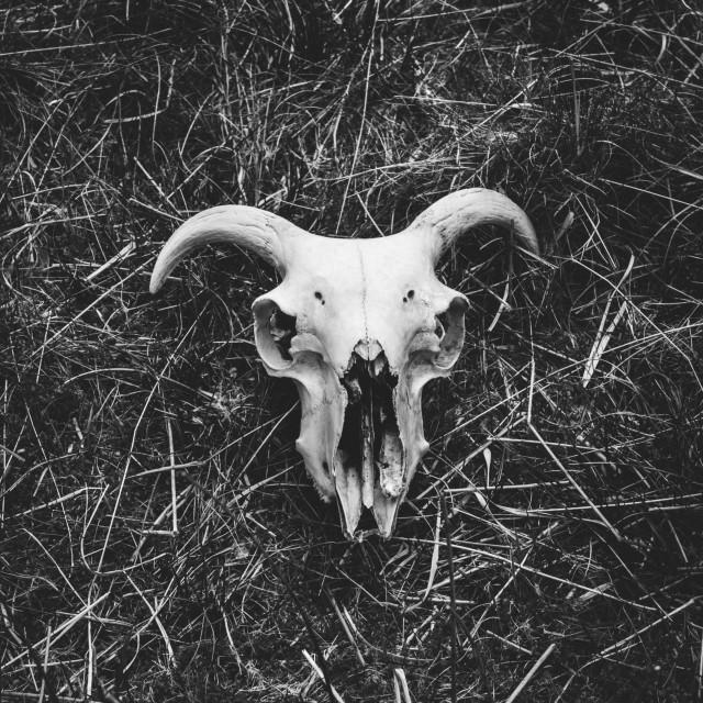 """Skull"" stock image"