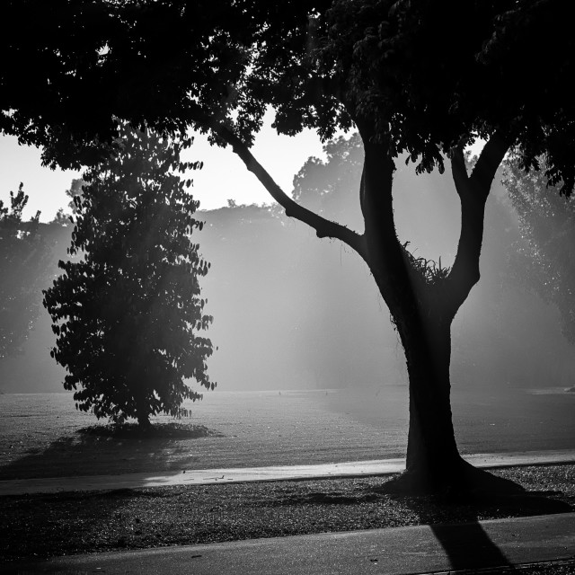 """Mist, Light & Trees - Study 1"" stock image"