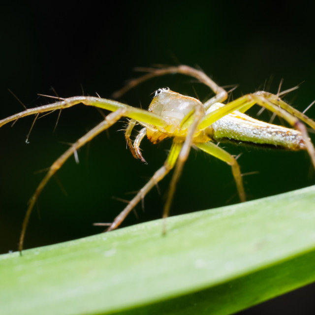 """Spider is posing on a green leaf"" stock image"