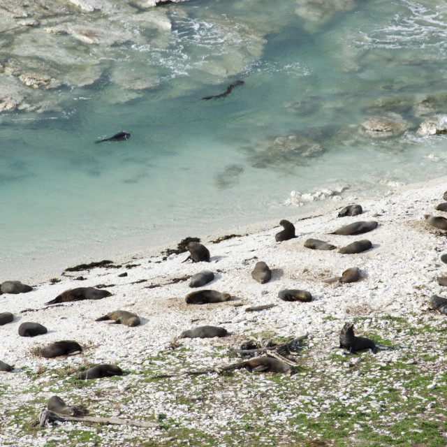 """Seals on a Beach"" stock image"