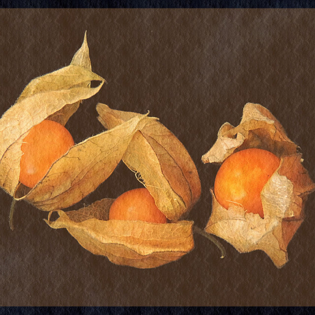 """Fruit Still Life"" stock image"