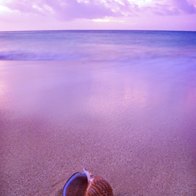 """""""A shell sits in the sand as the Sunsets over the island of Uoleve in Tonga"""" stock image"""